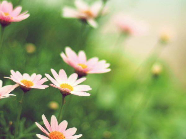 La dieta di primavera: semplicità e freschezza, per risvegliare il corpo