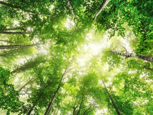 Forest Bathing, la terapia antistress a tutta Natura