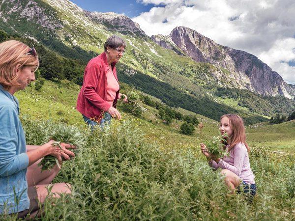 Foraging: alla scoperta delle erbe spontanee commestibili